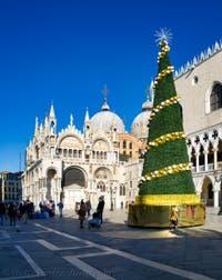 Venice Cristmas Tree on Saint-Mark's Square