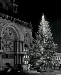 Venice Christmas Tree in Saint-Mark Square.