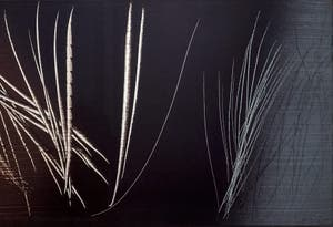 Hans Hartung, T 1962-E-15, at the Peggy Guggenheim Collection in Venice