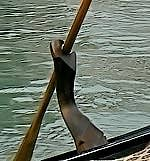 Forcola Gondola Venice