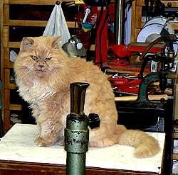 The Persian cat of Danilo Pastorello Venice Italy